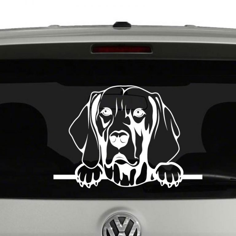 Weimaraner Dog Peeking Vinyl Decal Sticker